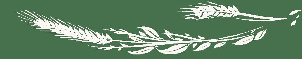 aehre-kundenstimmen-links